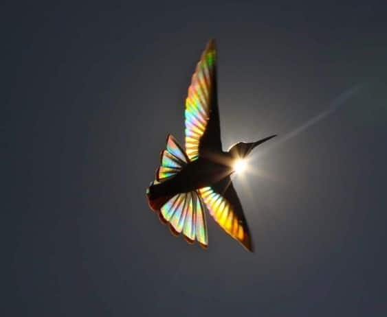 Pleine Lune du Sagittaire